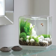 Een aquarium kun je kopen in verschillende soorten en maten. Een Nano aquarium bijvoorbeeld zoals op deze foto. Een plaatje in je woonkamer!