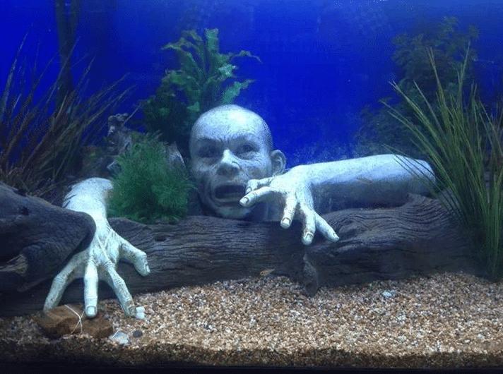Aquarium decoratie maakt of breekt je aquarium! (met tips)