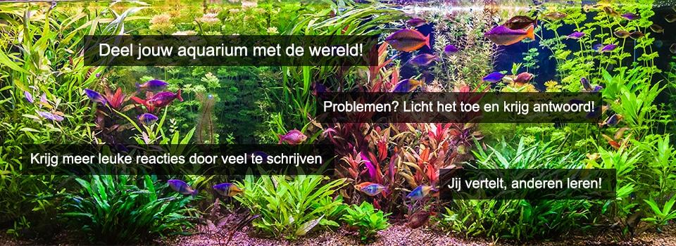 Deel je aquarium ervaringen met iedereen