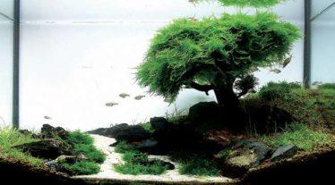 Jaloersmakende aquarium inspiratie met Javamos als basis
