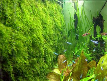 Javamos op de achterwand bevestigen zorgt voor een natuurlijk ogend aquarium.