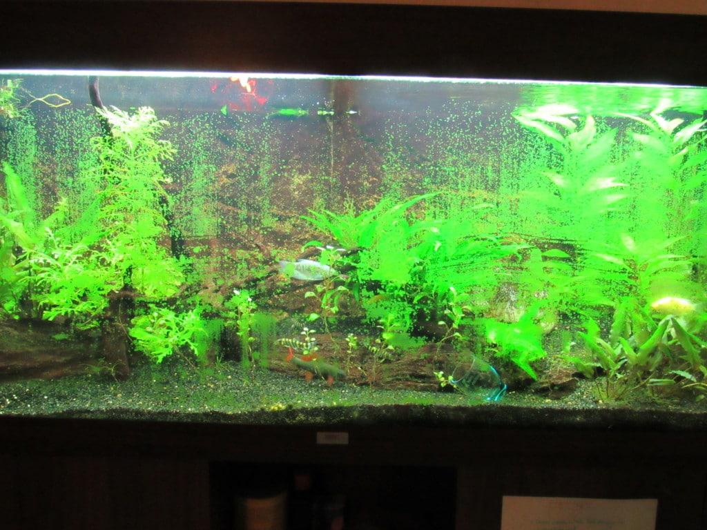 Kunstof aquariumplanten schoonmaken
