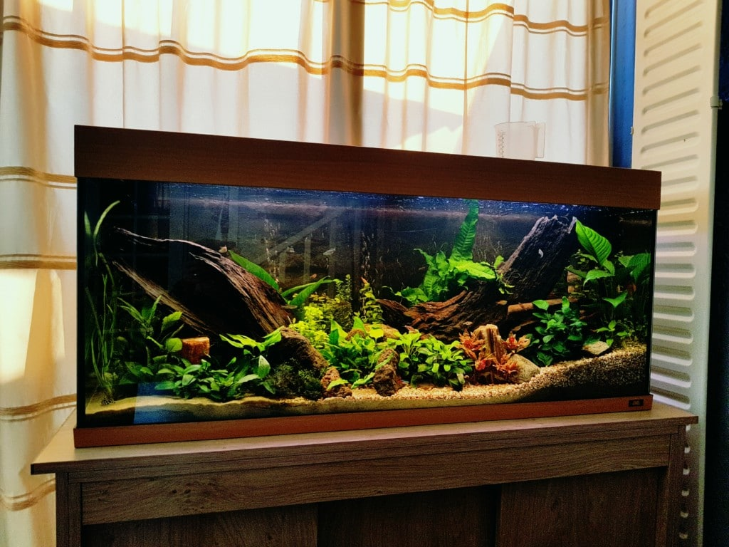 Botia aquascape aquariumfans for Aquarium 120x40x50