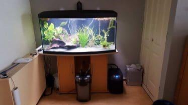 axolotl aquarium. Tetra EX 1200 Plus externe filter. DD Aquarium Koeler Dc-300 Tot 300ltr. Eheim 400 luchtpomp en ballen.