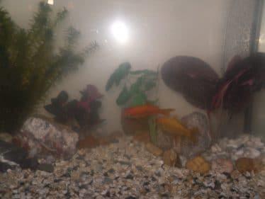Zoals ik begon nog zonder verlichting en alleen wat zuurstofbosjes, wel al met de 2 goudvissen
