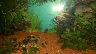 Dit is het hele Aquarium