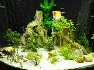 Plantenaquarium in wording met kunstmatig mangrovehout.