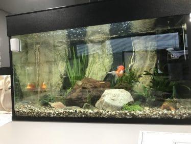 In het aquarium verschillende planten en verschillende stenen.