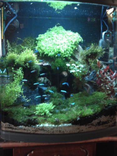 de overvloed aan mossen en de kardinaaltjes die prachtig afsteken op de variabele groene kleuren