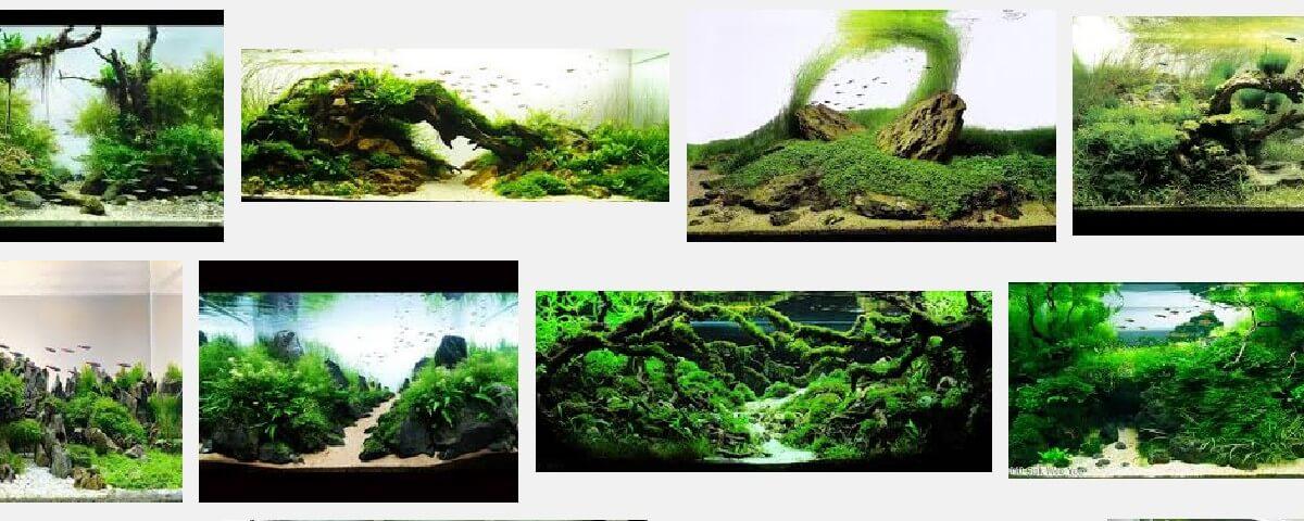 Aquarium inspiratie landschappen