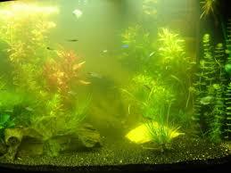 Zweefalg groen water