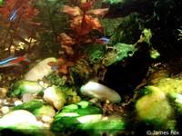 blauwalg aquarium