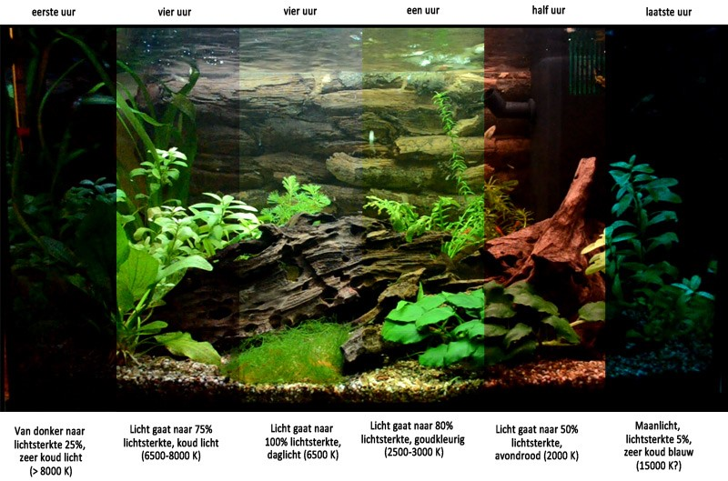 https://www.aquariumfans.nl/wp-content/uploads/2014/10/Aquarium-led-verlichting-en-lichtsterkte.jpg