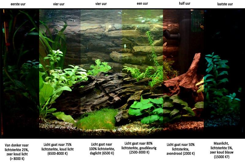De lichtsterkte is belangrijk in het aquarium