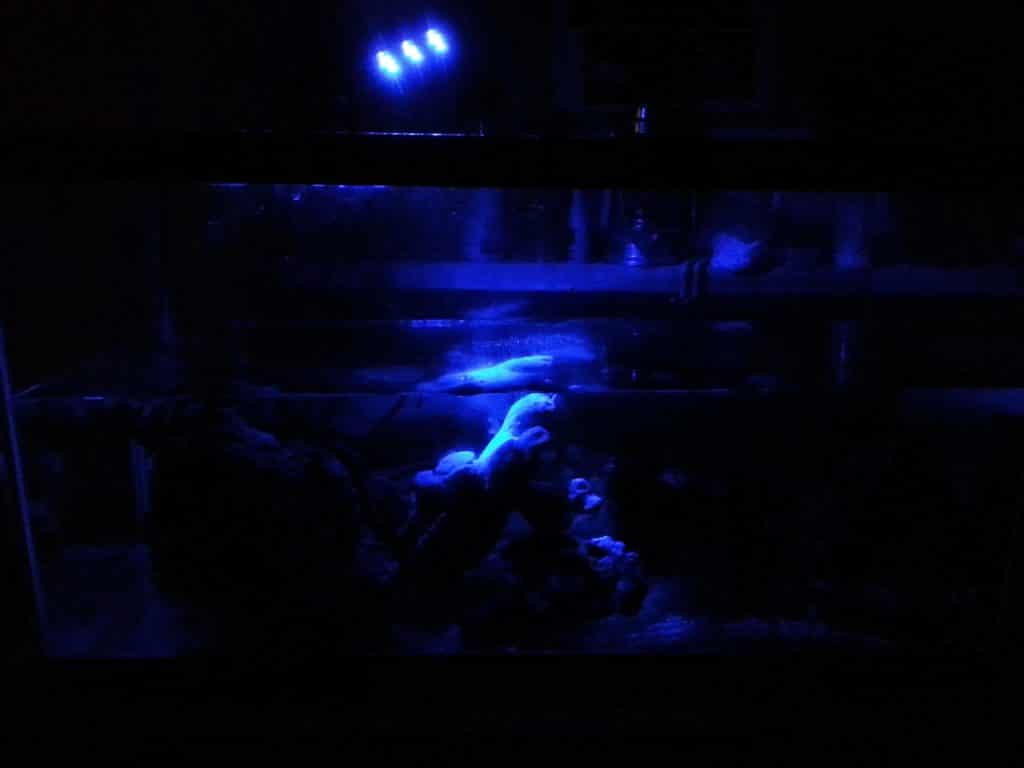 Moon Light aquarium led verlichting is een spektakel in het aquarium
