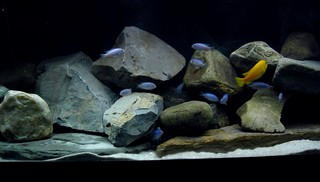 Aquarium achterwand