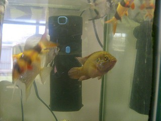 Aquariumfilter in je aquarium