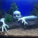 Een zombie in je aquarium? Het kan! Hopelijk blijft hij daar ook...