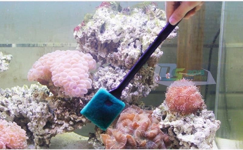 Schoonmaken met een sponsje zorgt ervoor dat algen verwijderd worden en geen krassen ontstaan