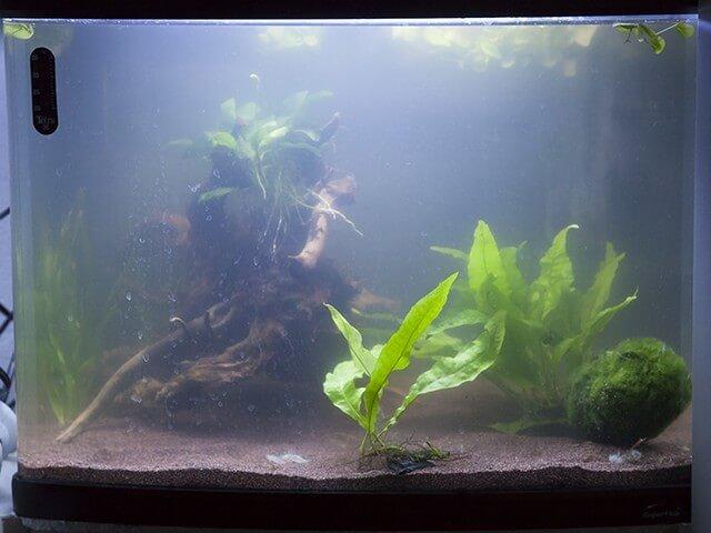 witte waas aquarium bestrijden algen