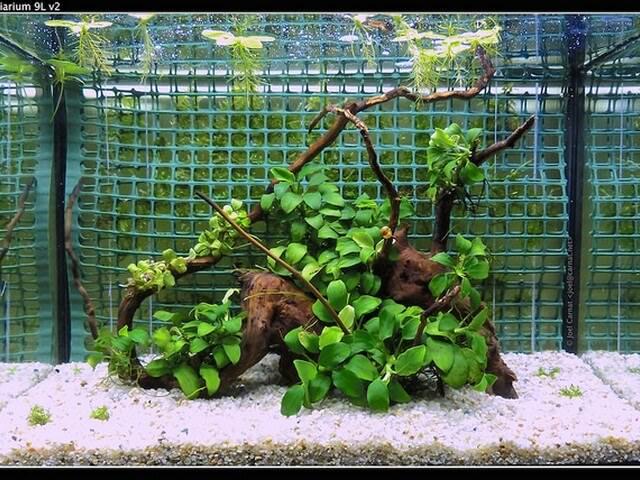 Anubias Barteri wordt ook wel gewoon de Anubias genoemd. behoort tot de langzaam groeiende aquariumplanten. Eén die houdt van beschutte plekken in je aquarium.