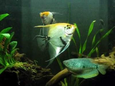 Maanvissen welke soorten zijn er allemaal for Welke woonstijlen zijn er