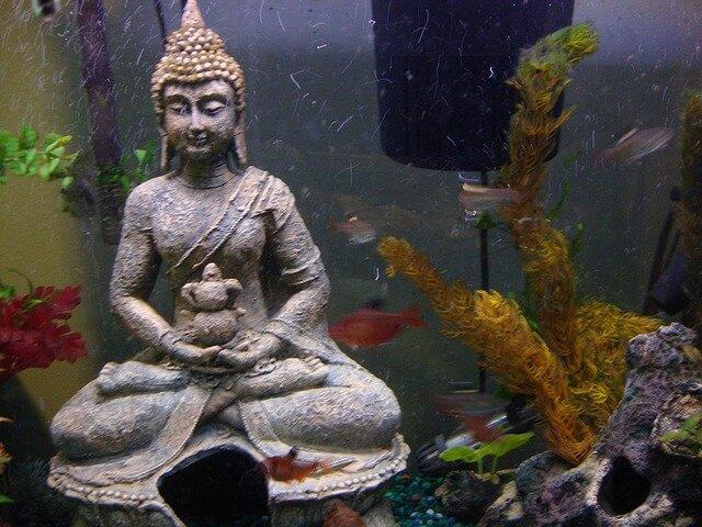 Aquarium Boeddha