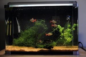 Aquarium hoeft niet altijd ingewikkeld te zijn. Soms volstaan een paar aquariumvissen en aquariumplanten. Het maakt je aquarium erg mooi!