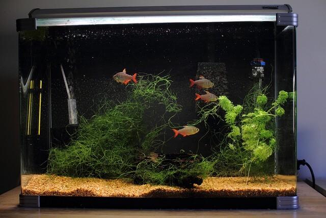Aquarium en meer