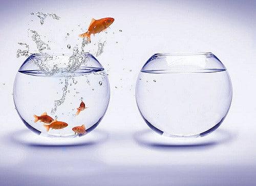 Goudvissen hebben veel ruimte nodig, een vissenkom is daarom vaak niet geschikt