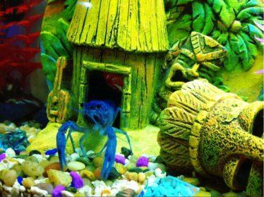 kunstmatige aquariumdecoratie kan een mooie aanvulling zijn op een aquarium met een blauwe kreeft