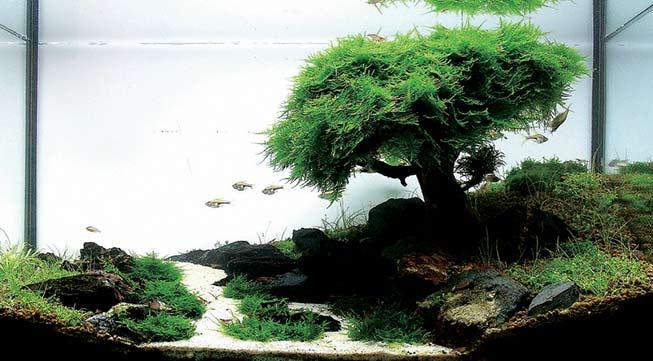 Jaloersmakende aquascape inspiratie met Javamos als basis