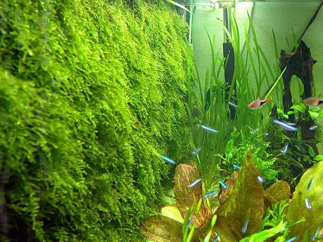 Javamos op de achterwand bevestigen zorgt voor een natuurlijk ogend aquarium