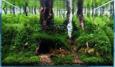 Aquascaping Hobbit een prachtig aquarium voorbeeld