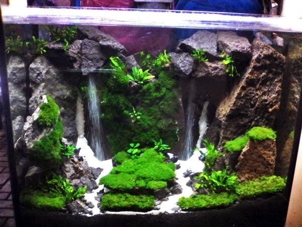 Waterval aquascape aquarium