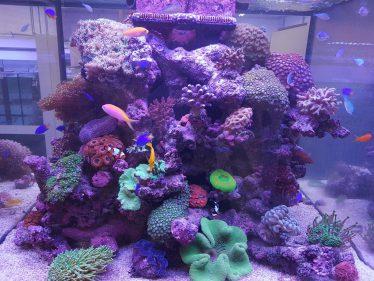 Een zoutwater aquarium met levend steen is erg mooi