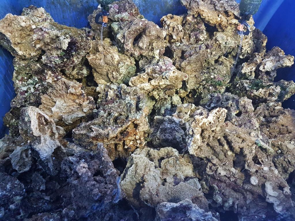 Levend steen zoutwater aquarium en vissen