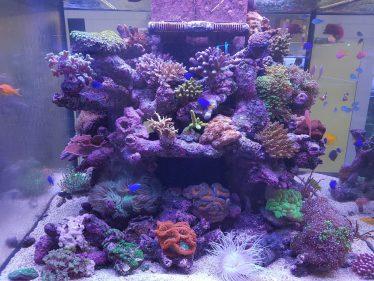 Prachtige zoutwater aquarium