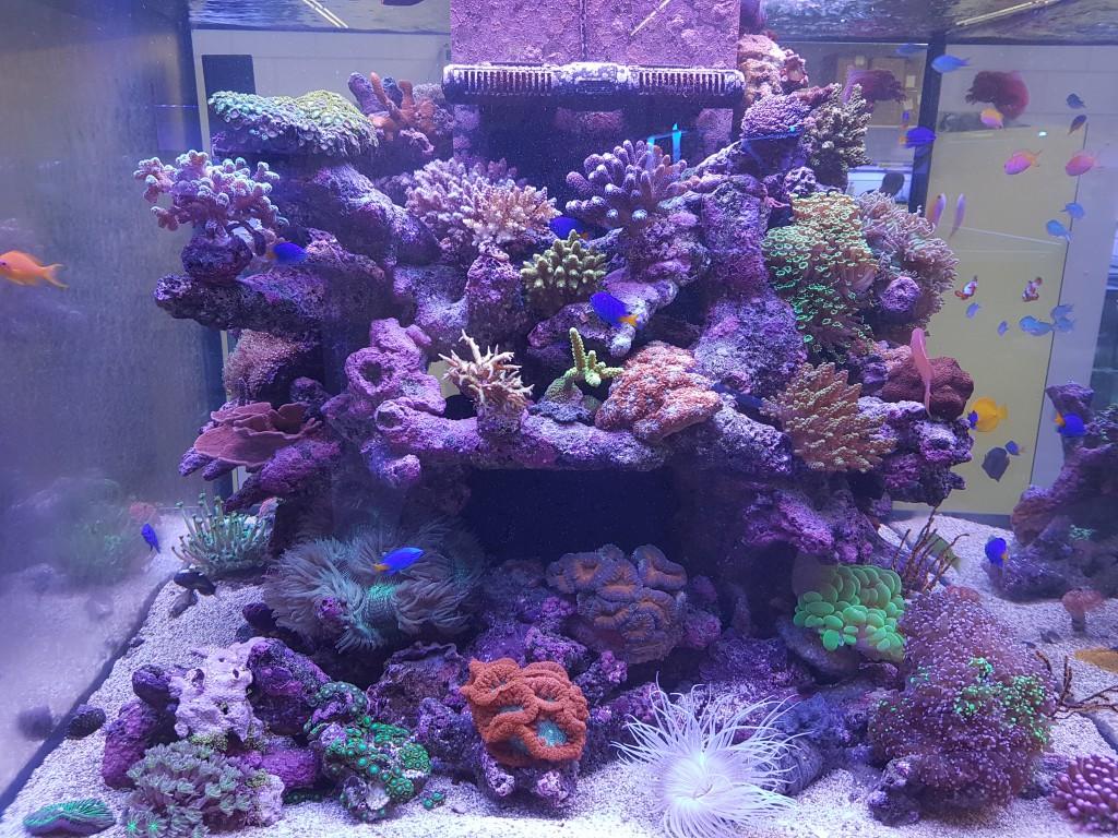 levend steen zoutwater aquarium