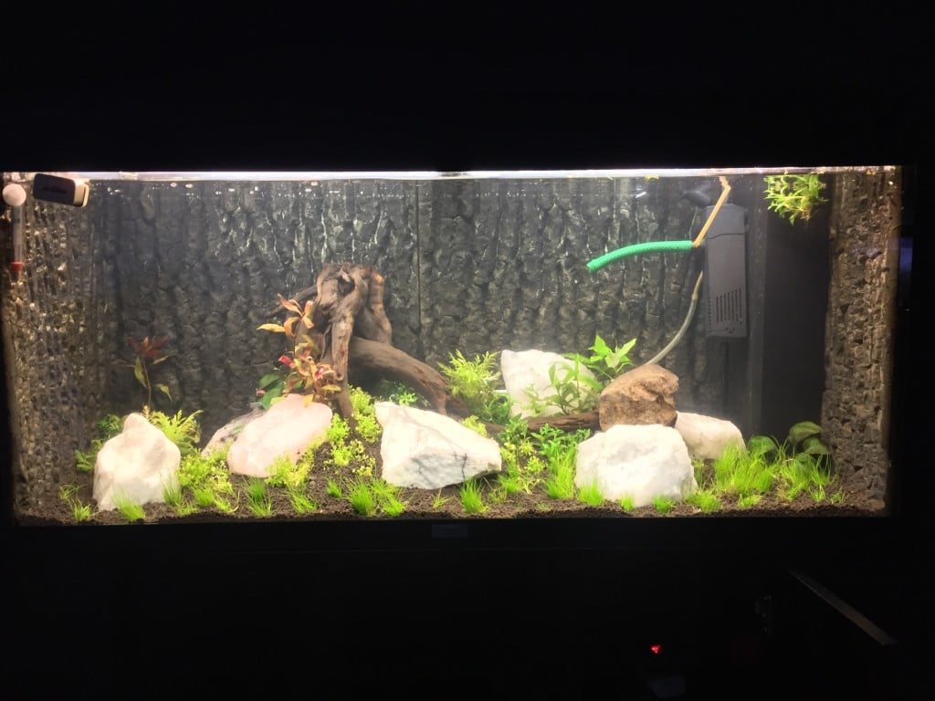 Just planted All plants first day