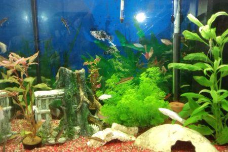 aquarium foto 1