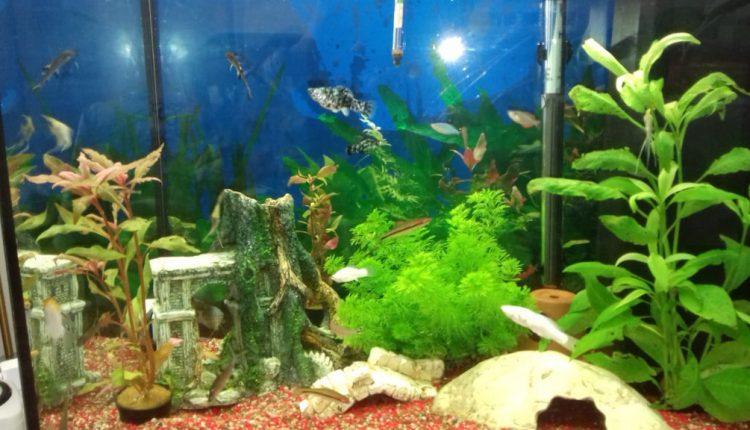 aquarium-foto-1