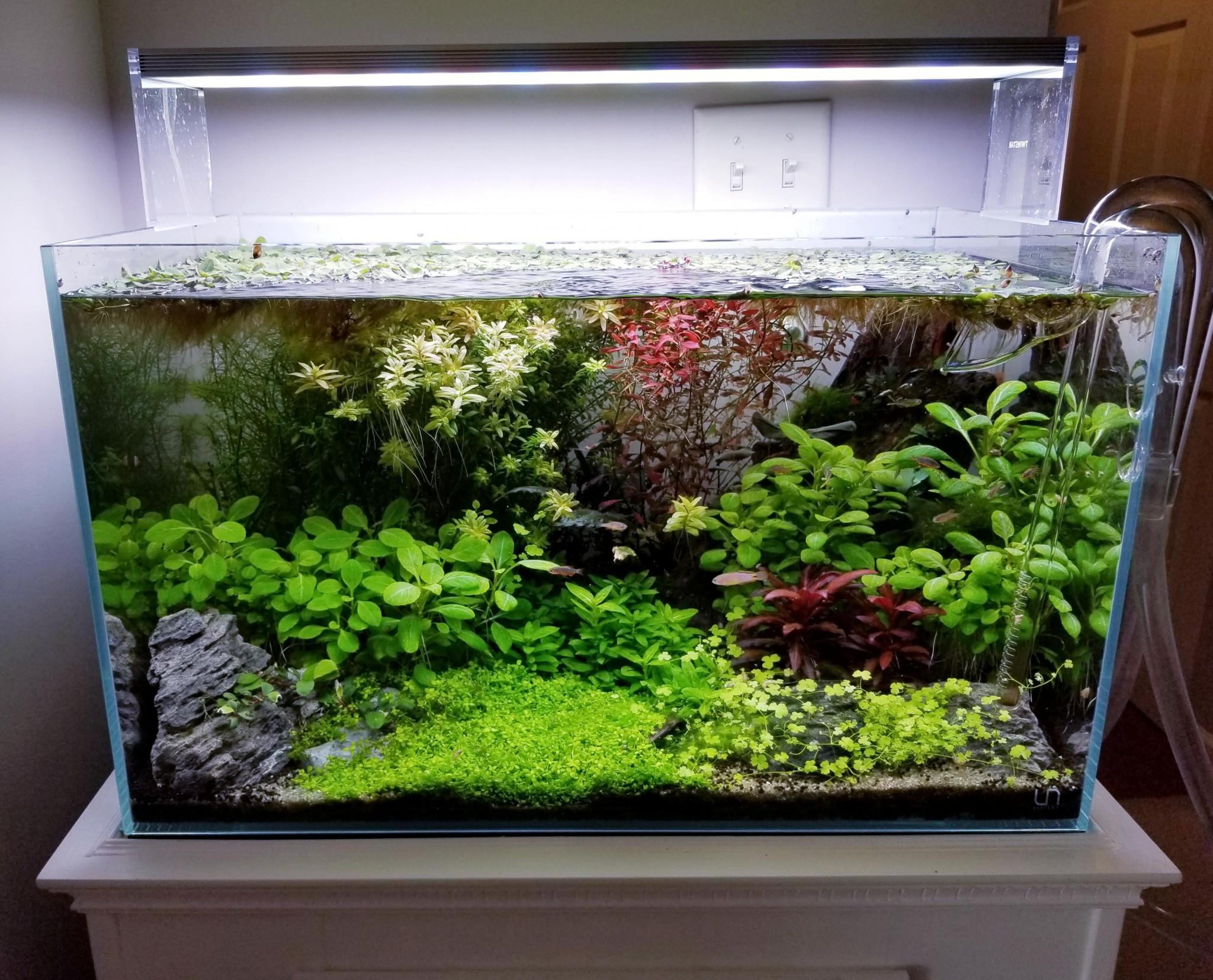 Te weinig vissen in je aquarium