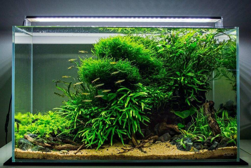 Aquarium advies op je aquarium mooi te krijgen