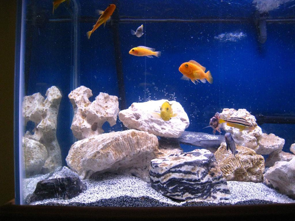 alg in aquarium