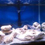 Witte stenen met cichliden in mijn aquarium