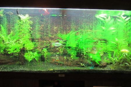 Algen op je aquariumruit