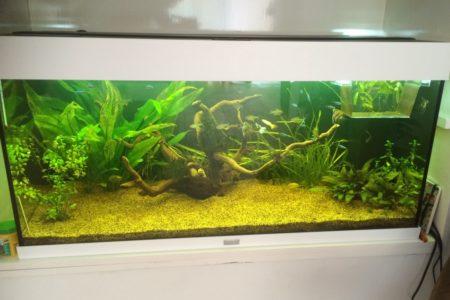 Dit is ons aquarium