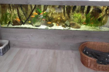 Dit is mijn goudvissen aquarium
