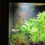 LED maakt zonnestralen! (Bij zonsondergang in het aquarium beter te zien.)
